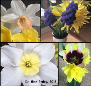 Desk Flowers 2016
