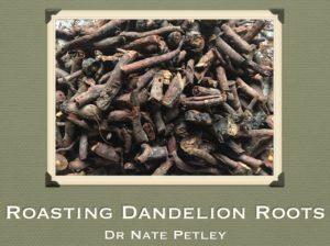 roasting-dandelion-roots