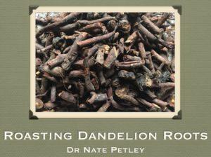 roasting-dandelion-roots