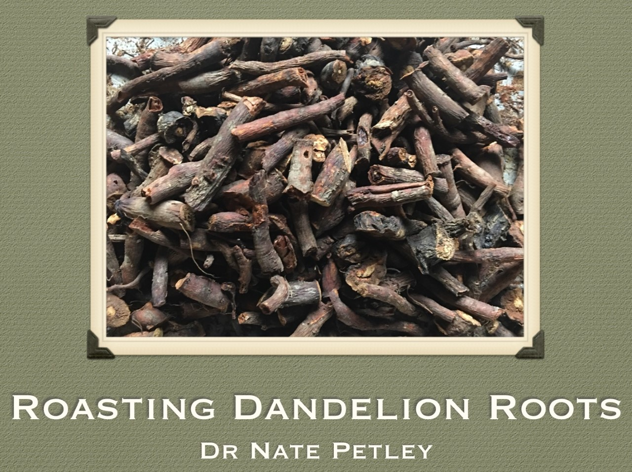 Roasted Dandelion Root Tea (Part 2)