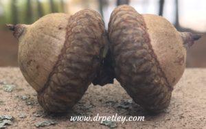 acorns-2