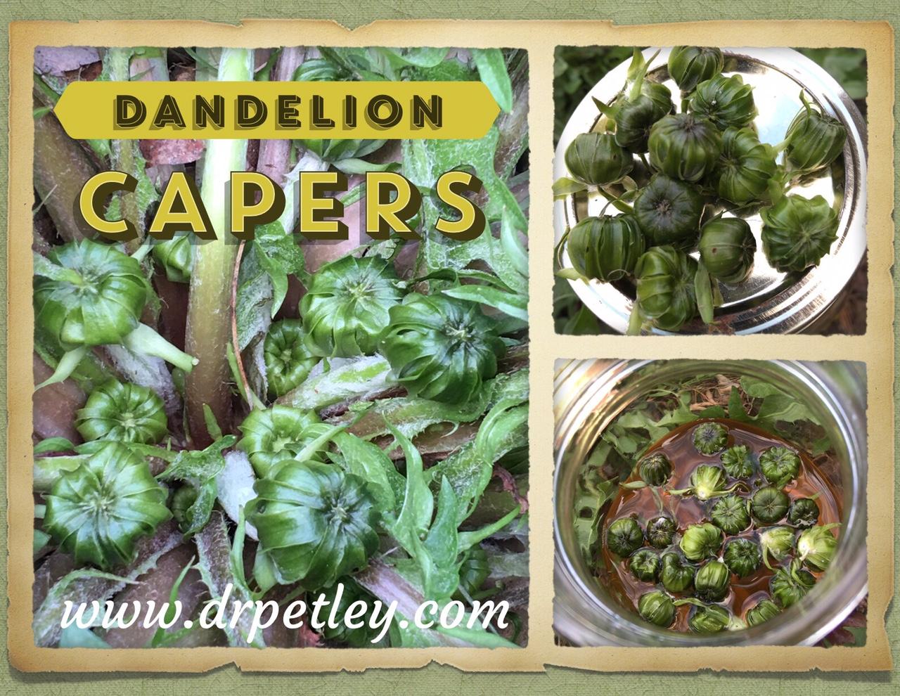 Dandelion Capers